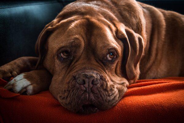 Byta hundförsäkring för äldre hund