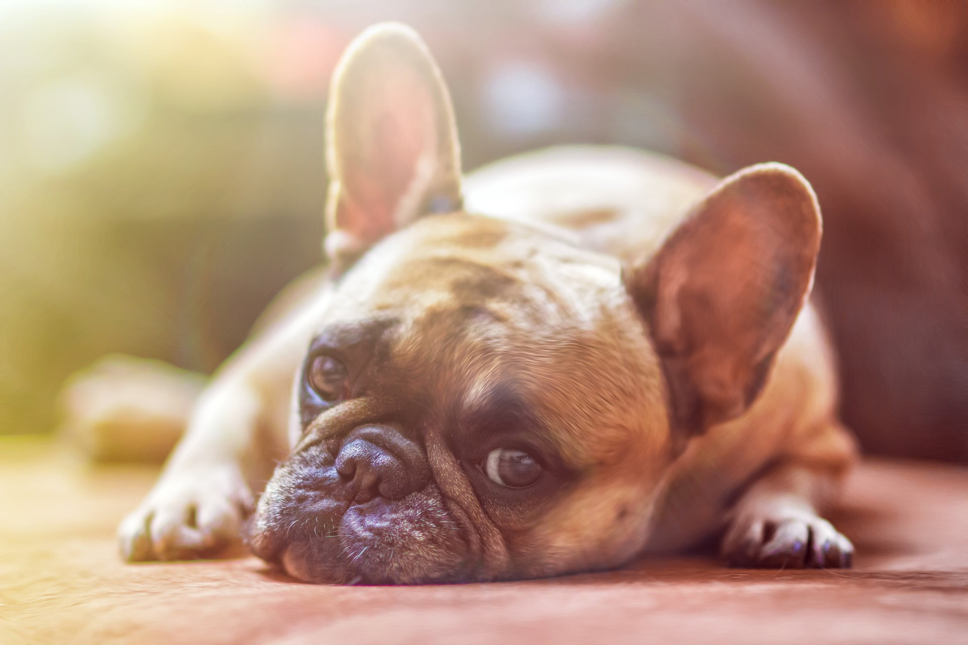 Jämför hundförsäkringar - Bästa hundförsäkringen? - Du avgör