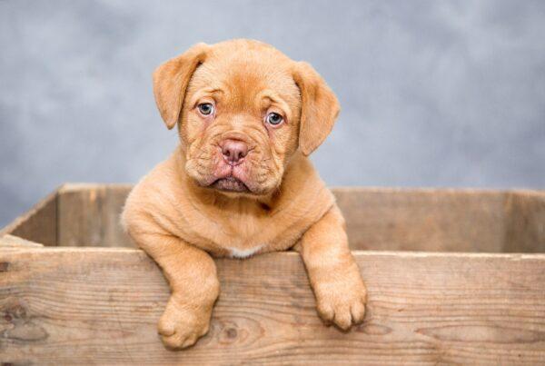 Försäkra hundvalp