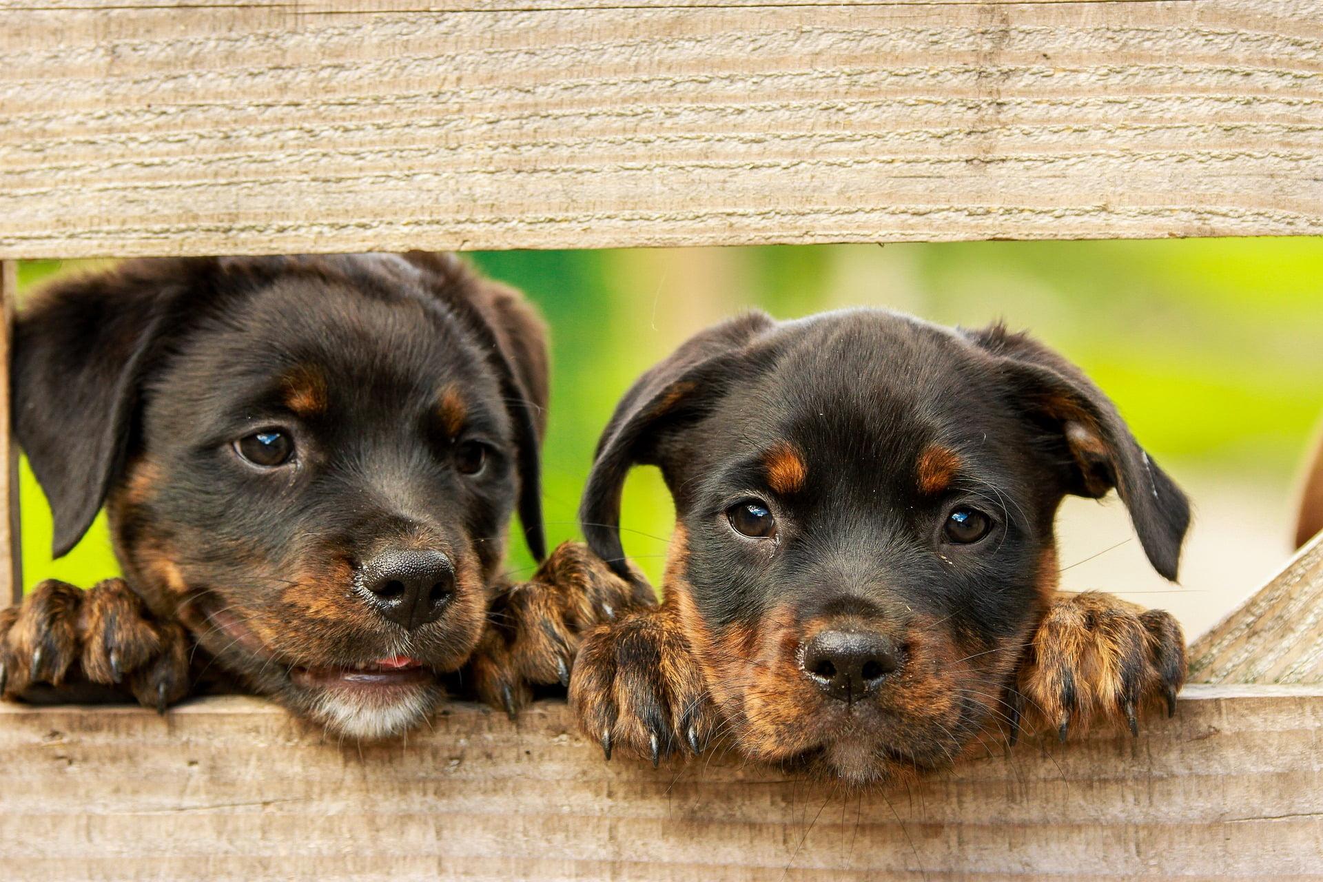 Jämför hundförsäkringar - Försäkra hundvalpar